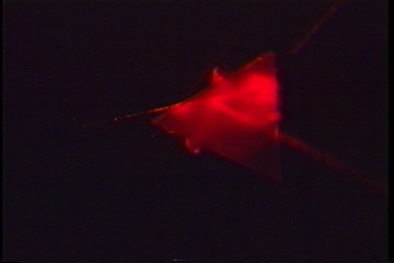 Red laser refracting through a prism